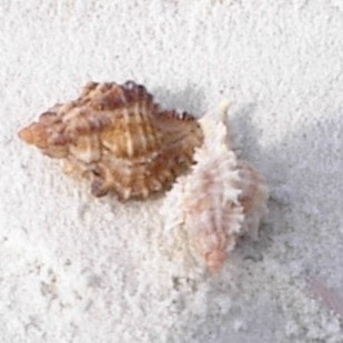 Find shells like this on our boat tour