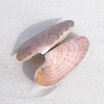 shelling tour on Marco Island